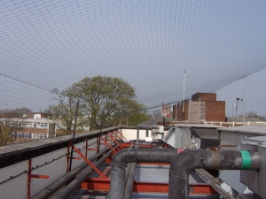 Roof pigeon netting image