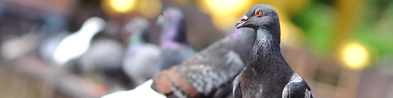 Bird Pests