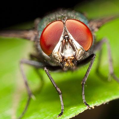 fly-closeup